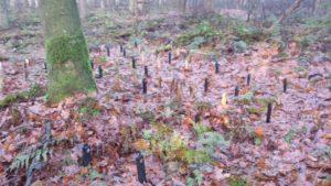 Testfeld mit Holzproben